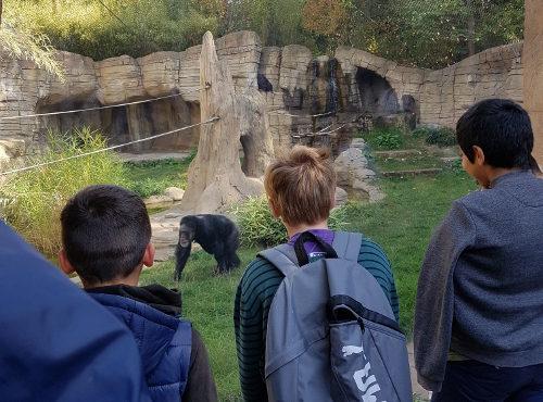 Zooprojekt